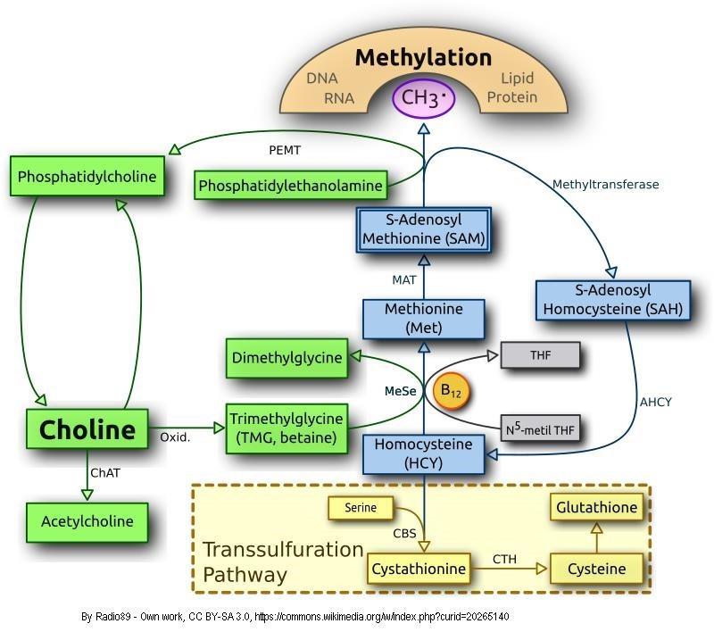 Neuro and Methylation