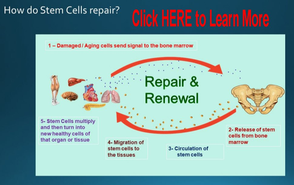 Learn more about how Stem Cells work within the body.
